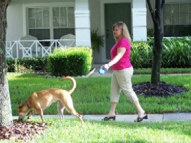 Pet Sitting Tampa
